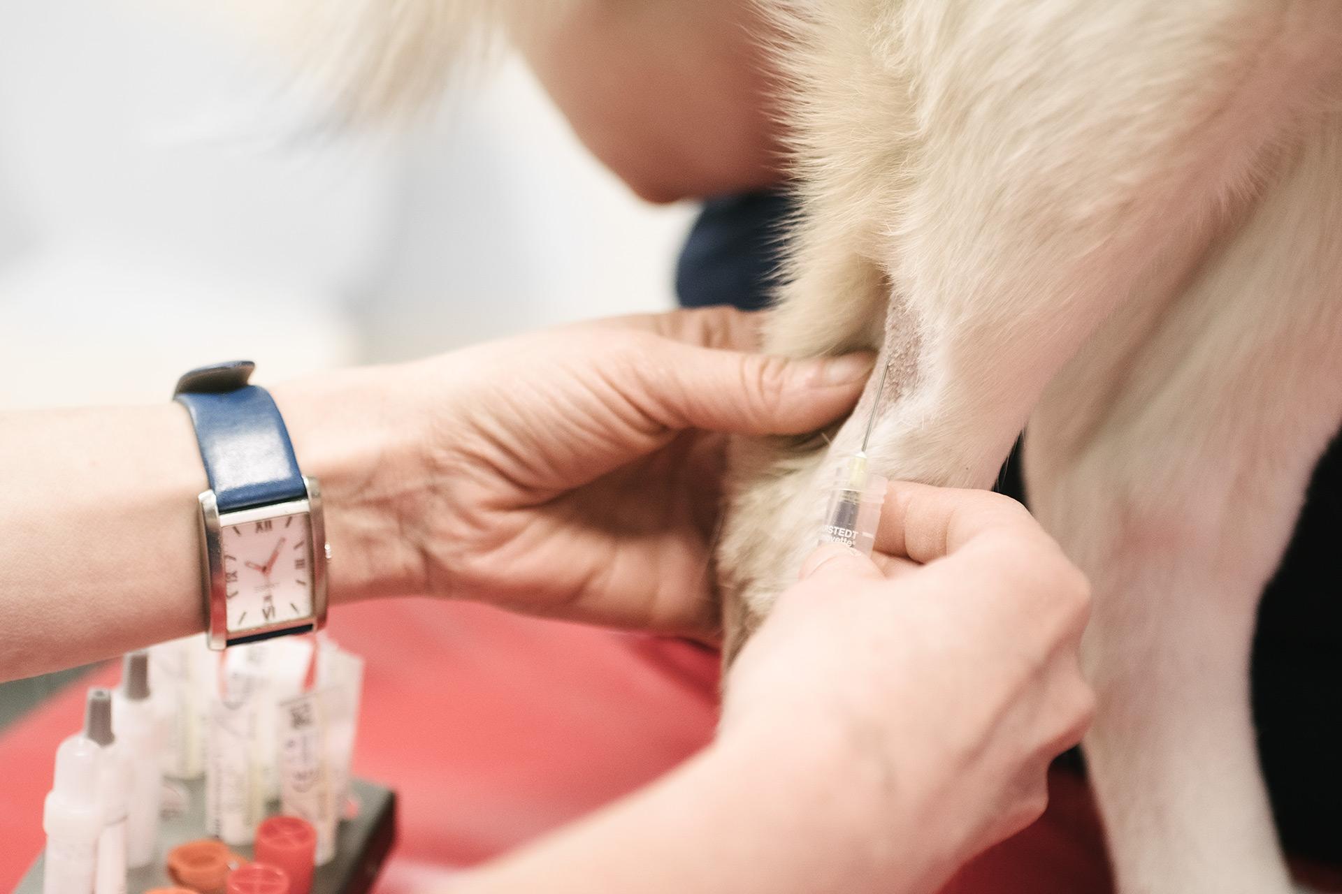 blokstudio_Tierarzt_Soerenson_Impfung
